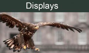 displays 2016