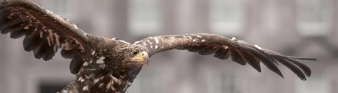 Falconry 1160×319