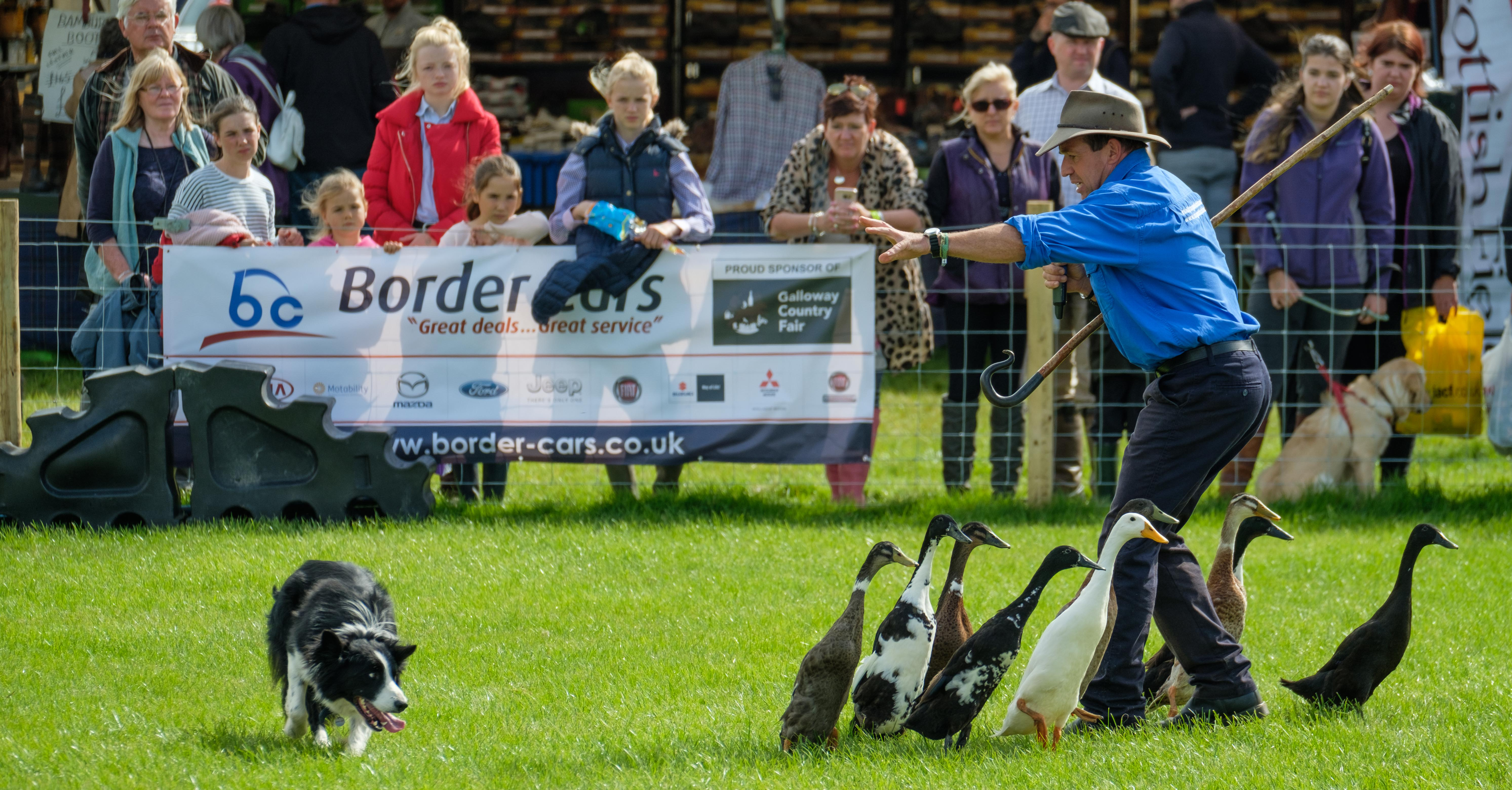 dumfries and galloway game fair